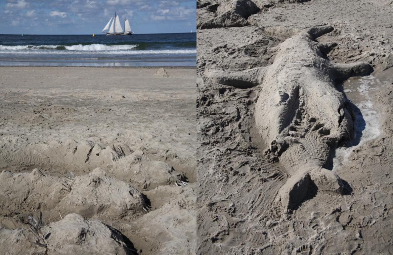 beeldgeschiedenis zee en zand vis